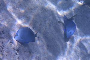 Reefs at Cayman